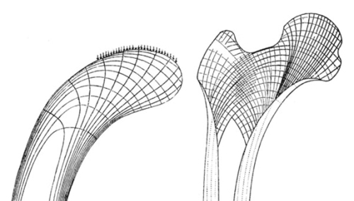 Crane head (left) and femur (right).