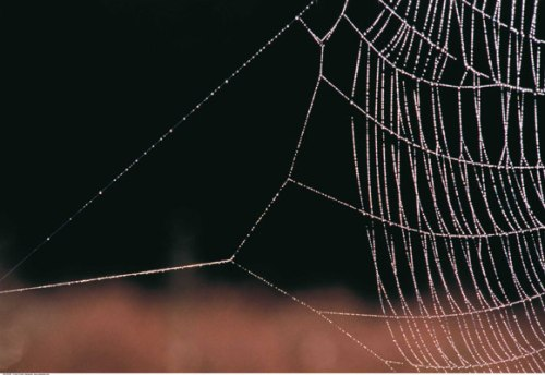 The spider web, an example of an efficient structure.