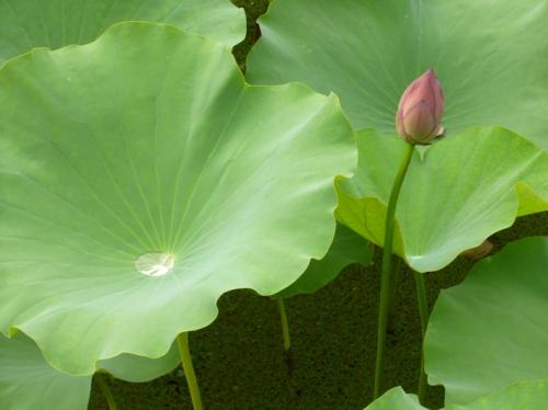 Lotus SXC.hu