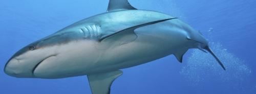 Sharklet